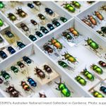csiro-unsorted-beetles.jpg